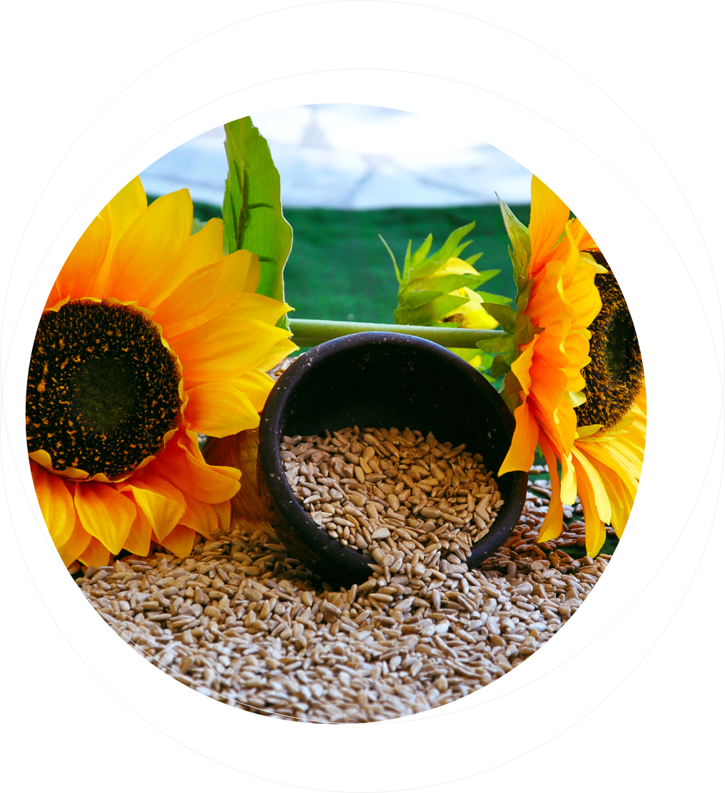 Sadina Sunflower and Kernels FAQ page
