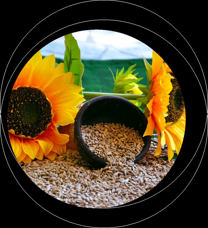 Sadina Sunflower and Kernels FAQ page